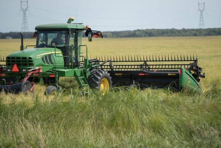 oat field in winnipeg