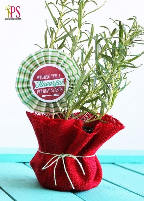 Potted herb in a red bag