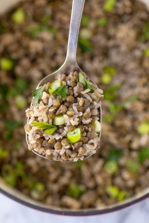 a spoonful of lentils and rice
