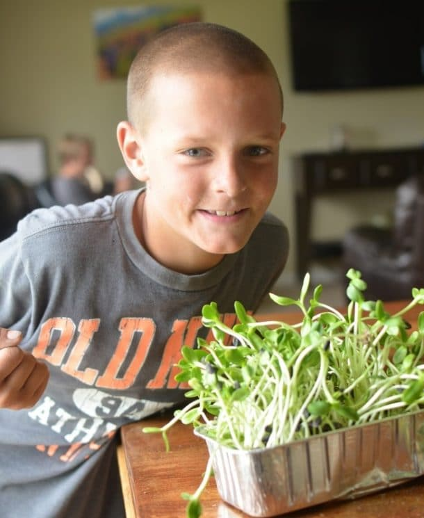Sunflower Sprouts- Grow, Spread, and Eat! A comprehensive guide to sunflower sprouts